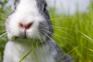 Le monde des lapins