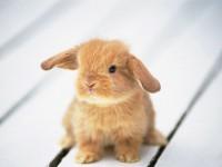 Petit lapinou - http://bruixeta.centerblog.net