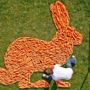 Lapin formé de carottes - © http://magpie-studio.com/