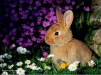 Miniature Lapin dans les fleurs humour-lapin.com