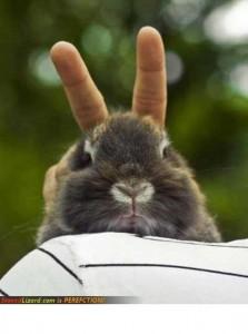 T'as des oreilles de lapin mon lapin - http://stonedlizard.com/