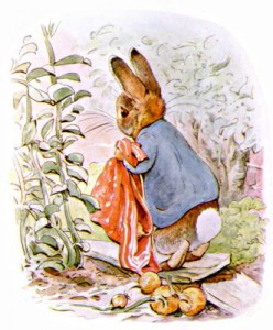 Illustration from children's book en:The Tale of Benjamin Bunny - Beatrix Potter (1904)