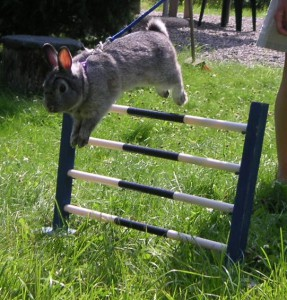 Lapin à un concours de saut de Wikkie (2005)