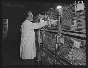 Lapins élevés en cage pour réaliser des expérimentations - United States. Office of War Information, Libray of Congress LC-USE6- D-008618