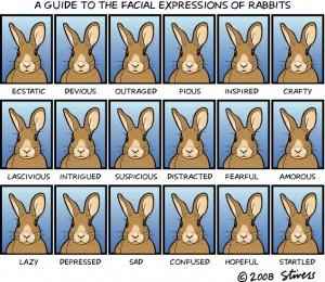 Guide des expressions des lapins - Stivers (2008)