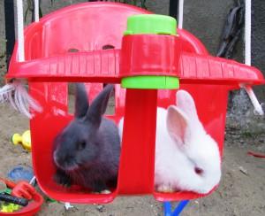 Deux lapins sur une balançoire