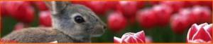 Bannière lapin - http://lespetitescroixdanaide.centerblog.net
