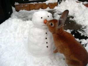 Lapin roux faisant connaissance avec un bonhomme de neige - Lapin noir