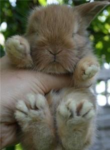 So cute de Gwen ©www.le-monde-des-lapins.fr