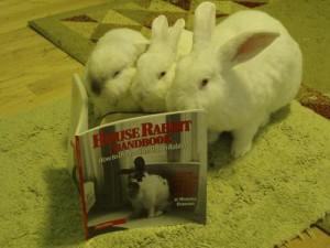 Lapins s'instruisent dans un livre sur les ... lapins - The Sarcastic Bunneh Show