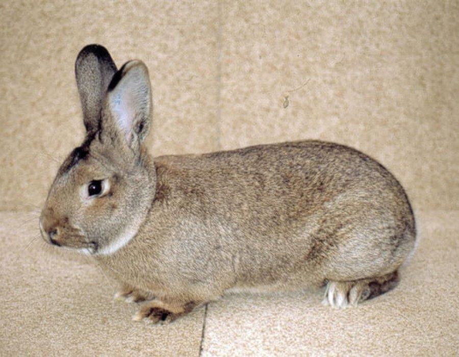 Dure de vie d un lapin de ferme affordable ferme des rue for Avoir un lapin a la maison