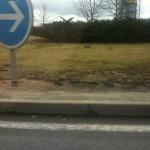 Les lapins du rond-point de Montmarault