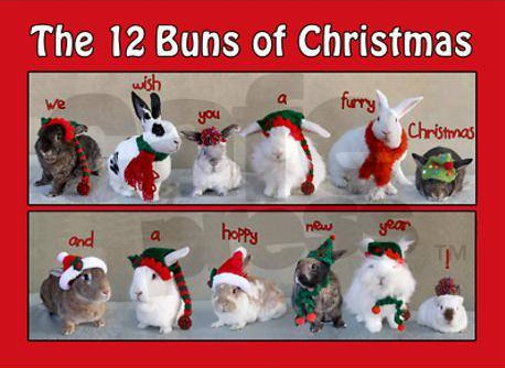 the 12 buns of christmas - lapins de noel